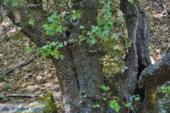 Petaloudes -Vlindervallei